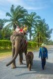 Niet geïdentificeerde familie op een reis van de olifantsrit Royalty-vrije Stock Foto's
