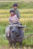 Niet geïdentificeerde jonge geitjes die waterbuffel op padiegebied berijden dichtbij Sa-Pa, Vietnam op 2 Oct, 2011 Royalty-vrije Stock Afbeelding