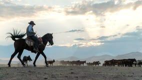Niet geïdentificeerde mens op een paard op een gebied met wild paarden stock foto