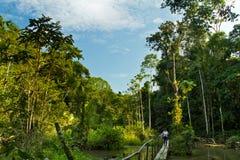 Niet geïdentificeerde toerist die door Amazonië lopen stock foto