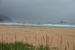 Niet-vliegt weer - zeemeeuwen die startontruiming wachten royalty-vrije stock afbeeldingen