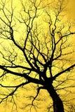 Nietig Enthrall-silhouet stock fotografie