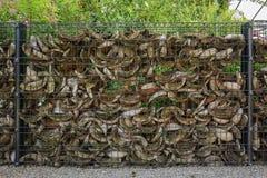 Nietige barrières gevulde shell van een kokosnoot Stock Foto's