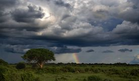 Nietknięta natura, tęcza po burzy przy Afrykańską sawanną zdjęcia royalty free