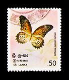 Nietneri tamil di Cethosia del Lacewing, serie di Butterfllies, circa 1978 Fotografia Stock Libera da Diritti