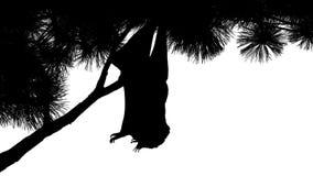 Nietoperz Wiesza Z Gałęziastej sylwetki zdjęcie wideo