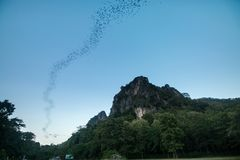 Nietoperze latają out jamę niebo obrazy stock