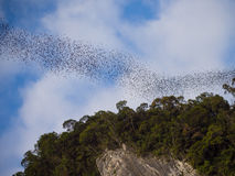 Nietoperze w Gunung Mulu Fotografia Stock