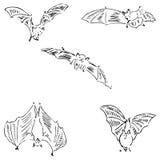 Nietoperze w różnych pozycjach Ołówkowy nakreślenie ręką Zdjęcia Royalty Free