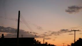 Nietoperzy latać zbiory