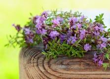Nieuprawna kwiatonośna macierzanka Obraz Royalty Free