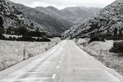 Nieustraszenie krowa na drodze zdjęcie royalty free