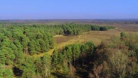 Nieuw bos nationaal park in Engeland van hierboven stock footage