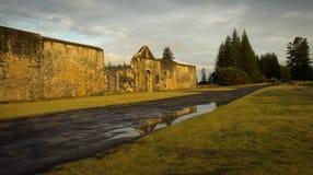 Nieuw Doel en Pijnbomen, het Eiland van Norfolk stock afbeeldingen
