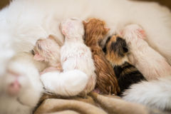 Nieuw - geboren kat met Stock Fotografie