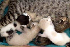 Nieuw - geboren katjes in een Karton stock foto's