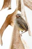 Nieuw - geboren vogel Royalty-vrije Stock Afbeelding