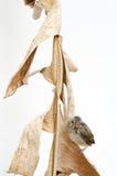 Nieuw - geboren vogel Royalty-vrije Stock Foto's
