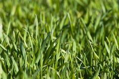 Nieuw groen gras royalty-vrije stock afbeeldingen