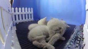 Nieuw - het geboren katjes slapen stock video