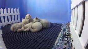 Nieuw - het geboren katjes slapen stock videobeelden