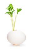 Nieuw het levensconcept met zaailing en eieren op wit Stock Foto's