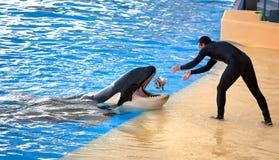 Nieuw Orka Oceaantentoongesteld voorwerp, Loro Parque Royalty-vrije Stock Foto