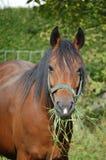 Nieuw Paard Forrest Royalty-vrije Stock Foto