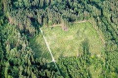 Nieuw reforested bebost gebied stock fotografie