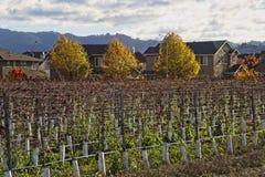 Nieuw wijngaardgebied in de kant van het oosten van Petaluma, CA royalty-vrije stock afbeeldingen