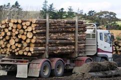 Nieuw Zeeland Forest Products stock fotografie
