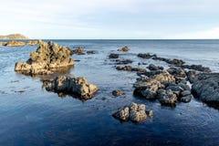 Nieuw Zeeland Rockpool, Brekerbaai Wellington Stock Afbeeldingen