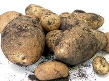 Nieuwe Aardappels Stock Afbeeldingen