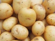 Nieuwe aardappels stock afbeelding