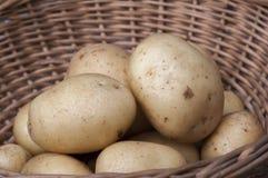 Nieuwe aardappels Casablanca stock foto