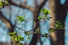 Nieuwe bladeren op een boom stock foto's