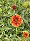 Nieuwe bloem stock afbeeldingen