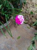 Nieuwe bloem Royalty-vrije Stock Afbeeldingen