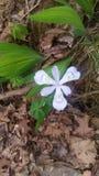 Nieuwe bloem die ik heb gevonden Royalty-vrije Stock Afbeeldingen