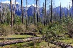Nieuwe boshernieuwde groei na brand in Siërra Nevada Mountains, Californië royalty-vrije stock foto