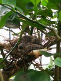 Nieuwe duif - geboren royalty-vrije stock foto's