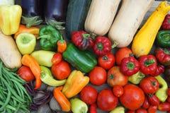 Nieuwe geplukte verse groenten stock afbeelding