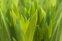 Nieuwe groene bladeren in de lente Stock Foto