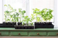nieuwe groene zaailingen royalty-vrije stock foto's