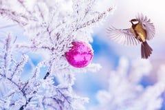Nieuwe jaarkaart met de mooie vliegen van de vogelmees aan Kerstmis tre stock afbeelding