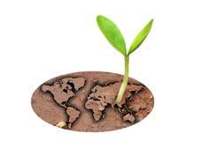 Nieuwe leven-Groene wereld Stock Foto's