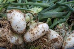 Nieuwe oogst van witte Siciliaanse uigroente op markt stock foto