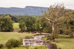 Nieuwe Paltz, NY Royalty-vrije Stock Afbeeldingen