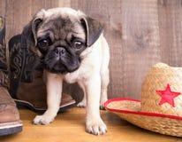 Nieuwe Sheriff in Stad - Leuk Pug Puppy royalty-vrije stock afbeelding