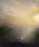 Nieuwe Spruit royalty-vrije illustratie